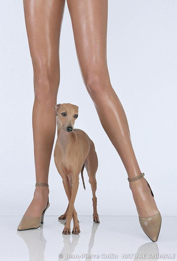 Galerie de jambes féminines propagation libre