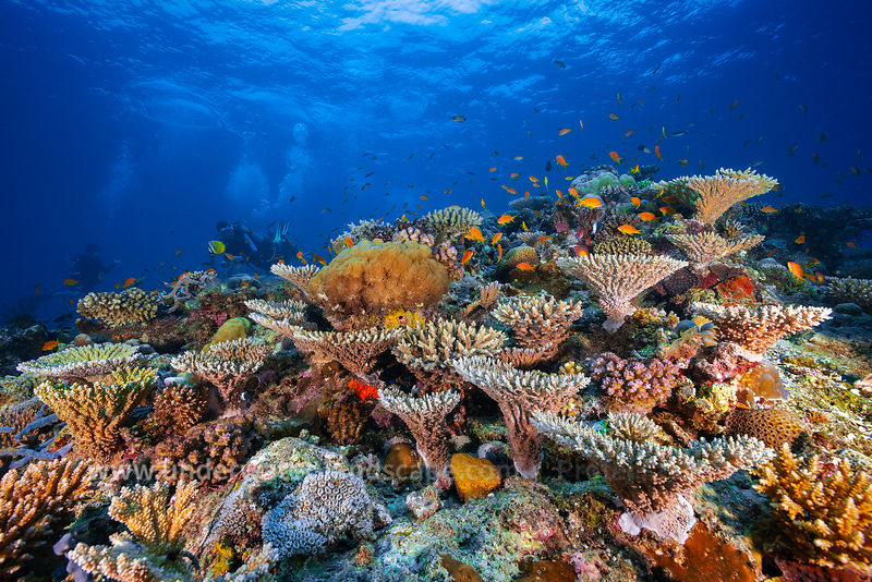 Reef of Mayotte!!!