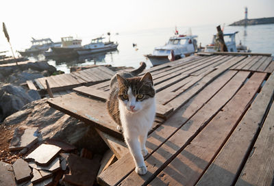 Cat walking on pier