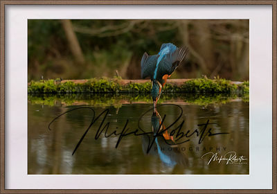 kingfisher-53-Edit