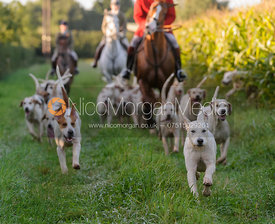Cottesmore Hunt hounds