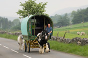 Horse drawn caravan on the road heading to Appleby horse fair, Cumbria