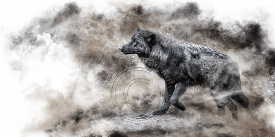 Art-Digital-Alain-Thimmesch-Loup-21