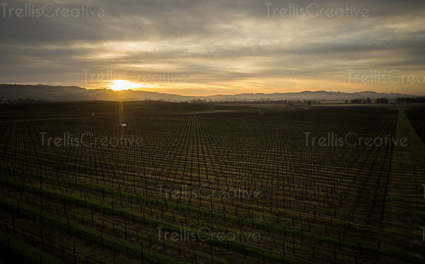 Sunrise covers a Napa Valley vineyard in golden sunlight