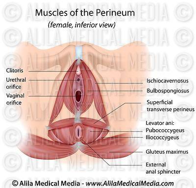 Alila Medical Media Urinary System Images