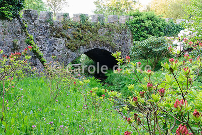 Long grass full of wildflowers such as red campion, alkanet and bluebells softens the intense colours of rhododendrons and azaleas with dark grey crenellated bridge beyond. Lukesland, Harford, Ivybridge, Devon, UK