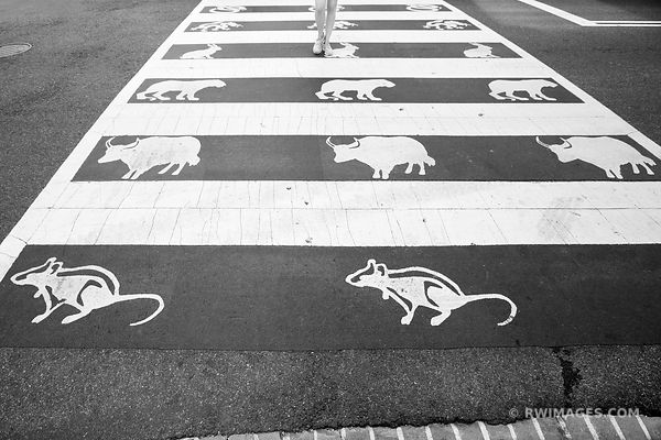 CHINESE ZODIAC SIGNS CROSSWALK CHINATOWN WASHINGTON DC BLACK AND WHITE