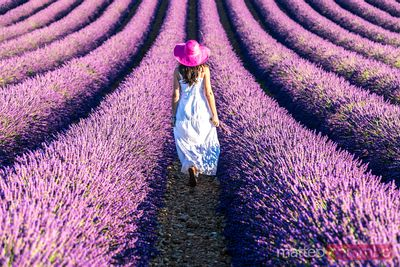 France - Provence images