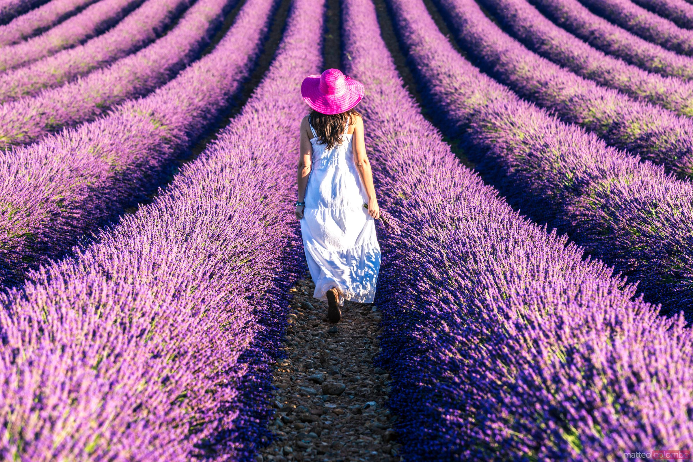 Woman walking in the lavender, Provence, France