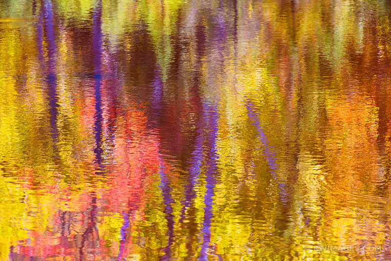 AUTUMN FOREST WATER REFLECTIONS ADIRONDACK MOUNTAINS FALL NATURE ABSTRACT