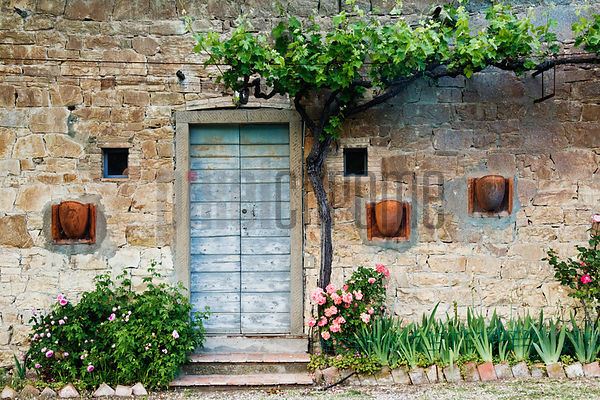 Flowerbed and Vine outside Building, Chianti Region, Tuscany, Italy