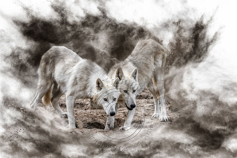 Art-Digital-Alain-Thimmesch-Loup-2