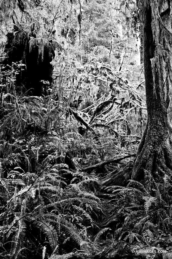 FOREST OLYMPIC NATIONAL PARK BLACK AND WHITE