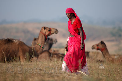 Woman in a bright red sari walking past camels in Pushkar, Rajasthan, India