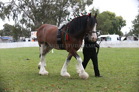 HOY_220314_Clydesdales_2395