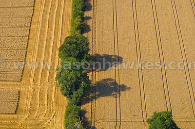 Fields, near Lewknor, England
