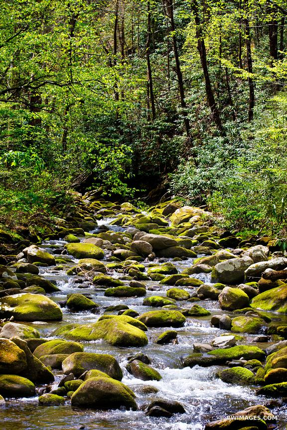 FOREST STREAM MOSSY STONES SMOKY MOUNTAINS NATIONAL PARK COLOR VERTICAL
