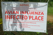 Bird flu outbreak warning