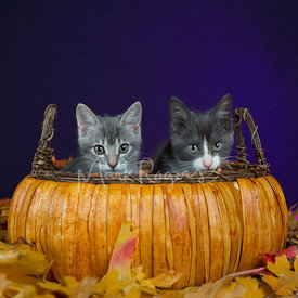 Two kittens sitting in a pumpkin basket