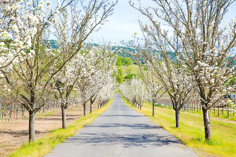 SPRING TIME IN NAPA VALLEY CALIFORNIA