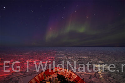 Northern lights over sea ice - Greenland