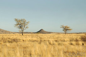 Savanna plain