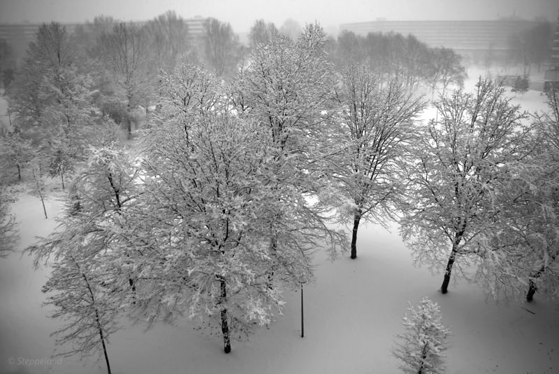 Looking down on snowy trees