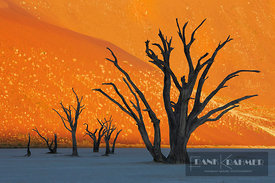 Dune impression with dead trees in Dead Vlei - Africa, Namibia, Hardap, Namib, Dead Vlei - digital