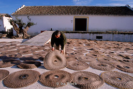 Man lays out grass mats used for pressing olive oil