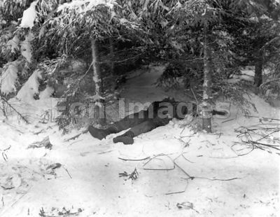 American casualty in snow near Bastogne