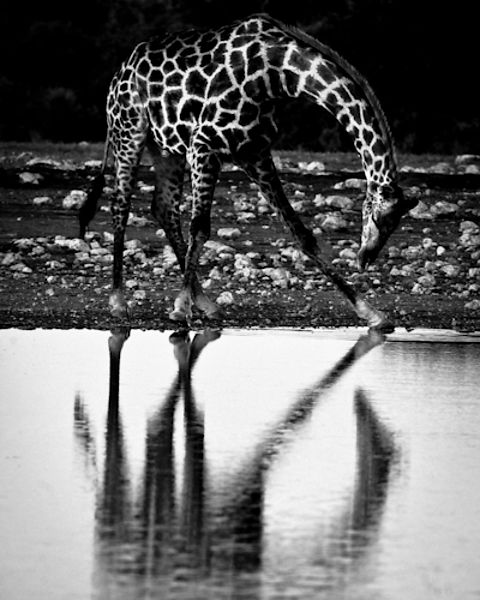 0793-The_giraffe_salutes_her_reflection_South_Africa_2008_Laurent_Baheux