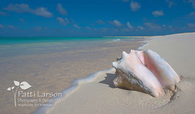 Special Treasure on the Beach, Anegada, BVI