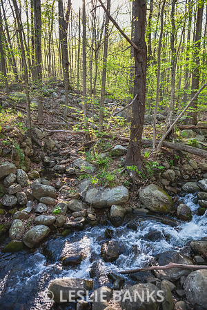 Trees and Creek in Shenandoah National Park