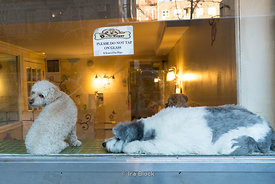 Dogs at a store in Chelsea, Manhattan, New York City
