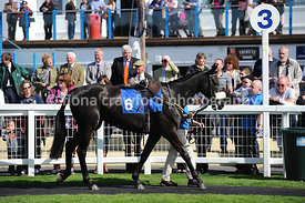 The SIS International Standard Open National Hunt Flat Race (Class 6)