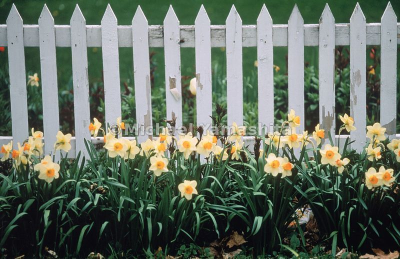 A white picket fence during spring in Vermont's Northeast Kingdom.