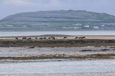 HR-Burren-Ireland2014-2116