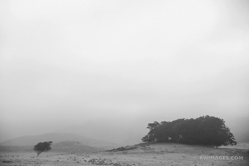 FOGGY MORNING POINT REYES NATIONAL SEASHORE CALIFORNIA BLACK AND WHITE