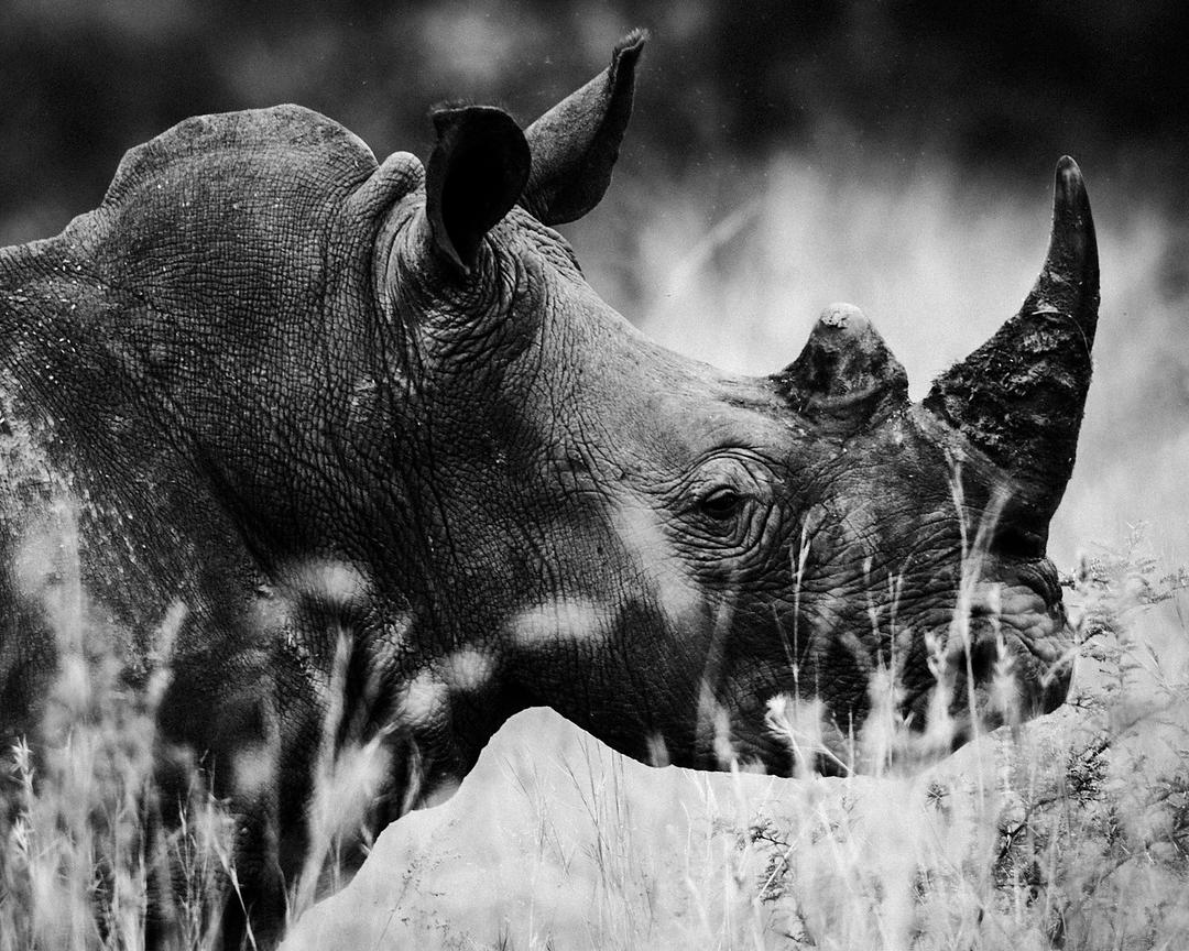 4773-Rhino_Laurent_Baheux