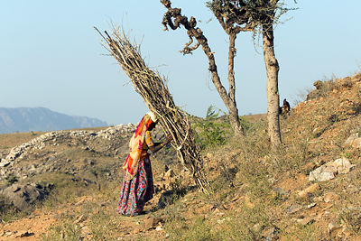 A woman and her son gather wood in the desert mountains, Ajaysar, Rajasthan, India