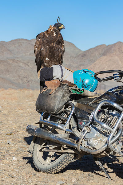Icons of the Altai: A Golden Eagle and an Iron Horse