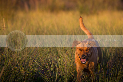 humorous dog with eyes closed standing in natural grasses