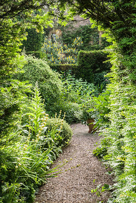 Cherry garden at Cothay Manor, Somerset with planting in cool greens including clipped box, ferns, Solomon's Seal, Sisyrinchium striatum and ferns around a central container
