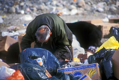 A man rummages through garbage in a trash dump in the remote village of Bella Coola, British Columbia. Behind him are two large black bears.