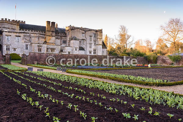 Forde Abbey  in spring photographs