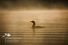 Loon in the Mist