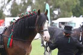 HOY_220314_Clydesdales_2398