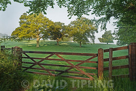 Five bar gate and pasture at Great Walsingham Norfolk in spring