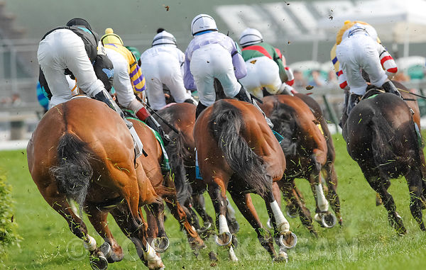 Horse Races photos