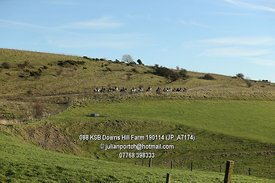 088_KSB_Downs_Hill_Farm_190114_(JP_A7174)